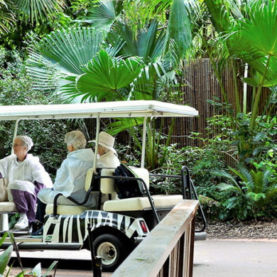 Hero-Image-zoo-cart